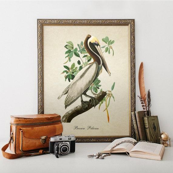 Botanical Bird Print Brown Pelican Vintage Natural History