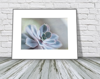 Boho Bathroom Wall Decor, Succulent Photo Print, Succulent Wall Decor  Print, Echeveria Photo