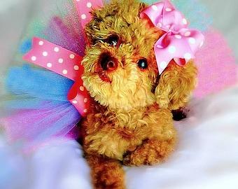 Dog Tutu, Pink Dog Tutu, Dog Costume, Pet Tutu, Dog Clothes, Tutu, Dog Dress, Dog Clothing, Dog Tutu Dress, Pet Clothing, Pet Costume