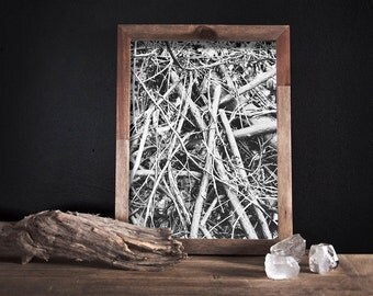 Black and White Art Black and White Photography Black and White Print Nature Photography Tree Bark Modern Nature Photography Black and White