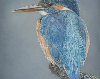 """Kingfisher watercolor bird Print 5x7 of watercolor painting 5"""" by 7"""""""