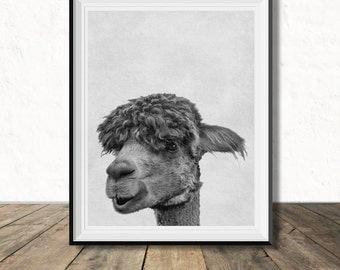 Funny Llama Portrait, Digital Download Wall Art, Nursery Photo, Child's Room Artwork, Black & White Wild Animal Photo, Alpaca Print, Modern
