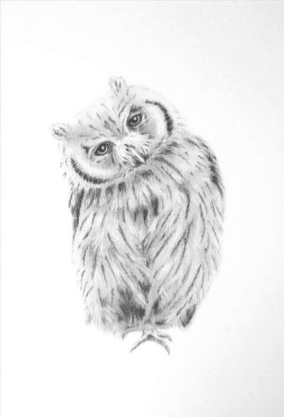 Original Baby Scops Owl Sketch Pencil Owl Drawing Baby Owl