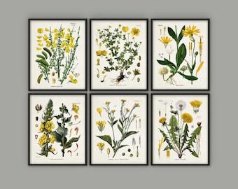 Yellow Flowers Print Set Of 6 - Vintage Yellow Flower Art - Floral Yellow Decor - Yellow Flower Botanical Art - Yellow Nursery Decor AB525