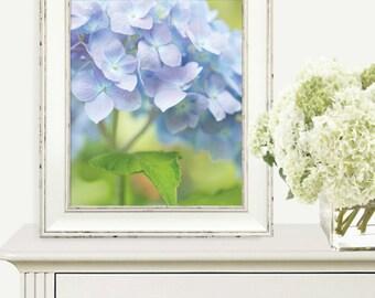 Lavender Blue Hydrangea Photo Print: Flower photography, spring, summer, botanical, soft blue, lavender, periwinkle, green, water blue