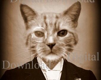 Mr. Cat Digital Download Photo