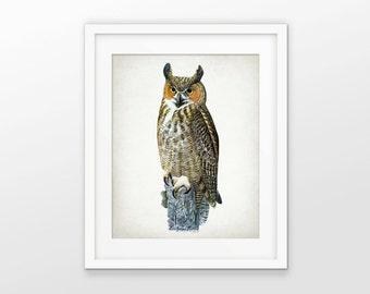Great Horned Owl Art Print - Antique Owl Art - Great Horned Owl Decor - Raptor Art - Bird of Prey - Single Print #1754 - INSTANT DOWNLOAD