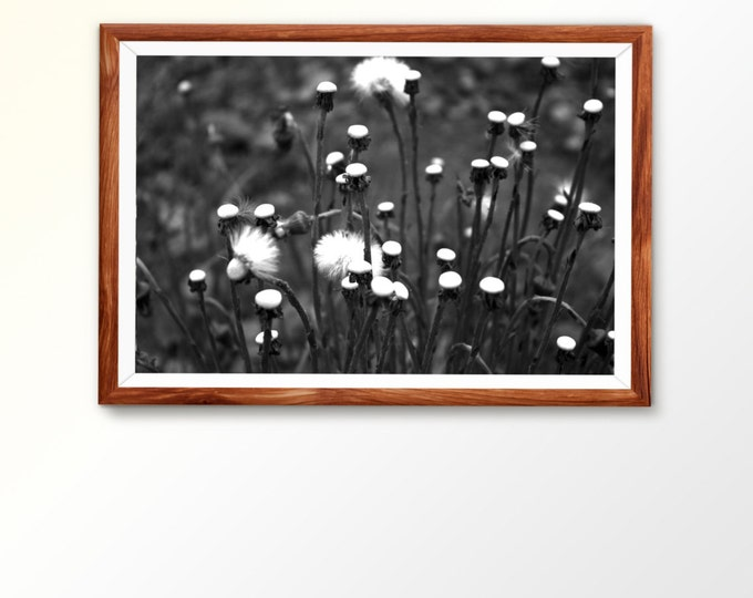 Fine Art Photograph Dandelion Photo Fine art download Instant Download Monochrome print BW photography Digital Download Nature Art Digital