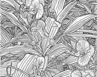 Orchids 1 Adult Coloring Pages Printable Gray Scale Digital Download Book Stress Relief
