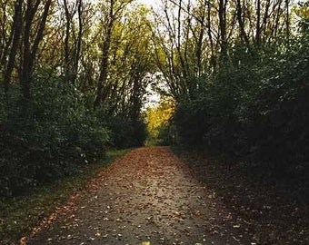 Bike Path in woods, Fall colors path, bike trail, running trail