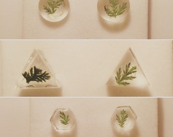 Real Ferns in Clear Resin Earring Studs - Various Shapes