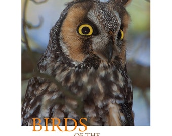 Birds of the Indiana Dunes--Long-eared Owl Poster