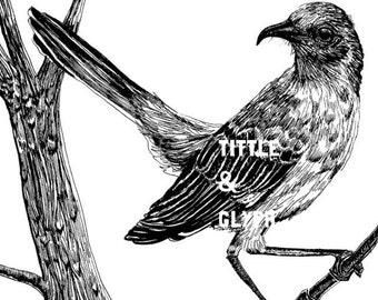 Mockingbird 9 x 12 Print