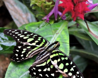 Photograph the rest of the butterfly / The rest of the butterfly Fine Art Photography / Printed Photography