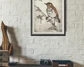 Original Etching NIGHTINGALE | Fine Art Etching - Bird Prints - Bird Art - Nightingale Drawing | Watercolor Bird Illustration | Wall Art
