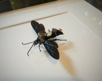 Entomology insect steampunk mechanical WaSP Hornet