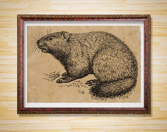 Woodchuck art print Antique Groundhog Wildlife decoration Animal poster