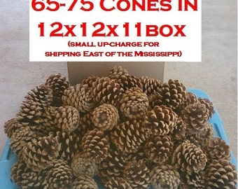 "DIY Bulk Box of 70 (or 150, 200) Ponderosa Pine Cones (2.5"" to 3.5"" long) Great for Pine Cone Wreaths, Wedding Deocr + Pine Cone Crafts"