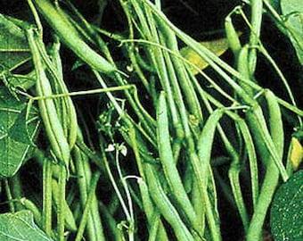 Mountain Half Runner Bean Seed, 1 Pound, Heirloom, Non GMO, USA Grown