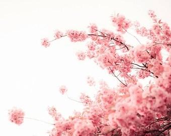 Photo botanique print fleurs de cerisier quartz rose p le rose - Photographie decoration murale ...