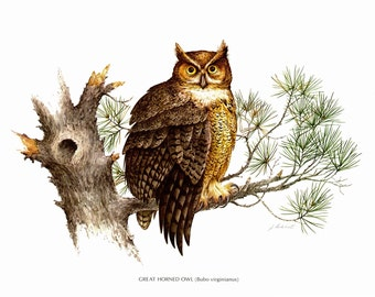 """A large print of Great Horned Owl painted by James Lockhart for the book Wild America. The bookplate is 15"""" wide and 12"""" tall."""