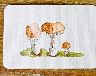 Mushrooms Postcard, Original, Ink with watercolour.