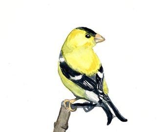Watercolor Goldfinch Print 8 x 10, bird art, home decor, art print, watercolor art, living room wall art, wall decor, bird painting nature