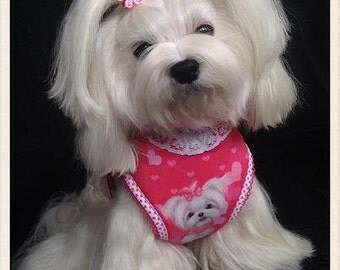 Maltese soft dog harness