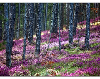PO2401 Poster Print Blooming Meadows WILDFLOWER FOREST Forest heatherArt