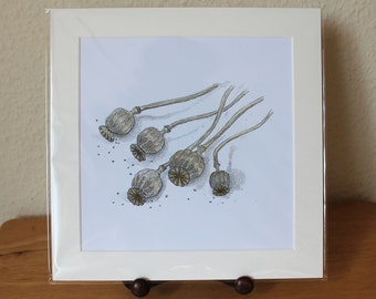 Poppy Seeds Heads Mounted Print, Detailed Large Square Artwork, Nature Design, Ready for Framing (Frame not supplied).