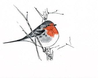 Postcard, Bird, Redbreast