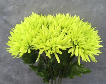 Lime green spider mums