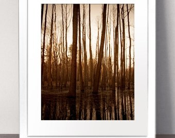 FOREST Paper Art Print Picture Size A3 A2 A1 Autumn Sepia Brown Woodland Trees Sunset Sunrise Photography Nature Landscape Bark Woods