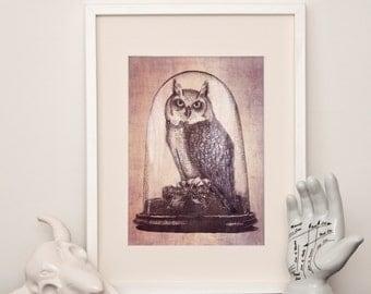 Taxidermy Owl - Art Print - various sizes