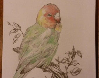 My Drawing Of A Love Bird.