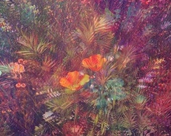 Print 'In Bloom'