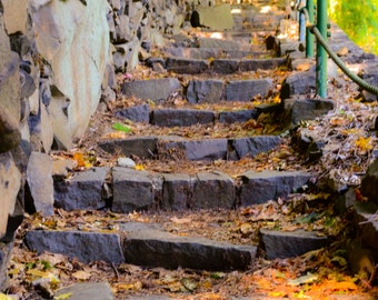 Stairway to.. PHOTOGRAPHY, LANDSCAPE, WALL art, trees, nature, wood, picture, art