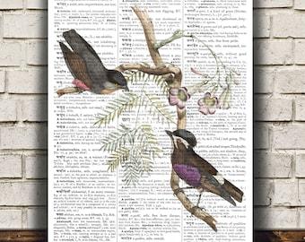 Purpletuft decor Bird poster Animal print Ornithology print RTA646