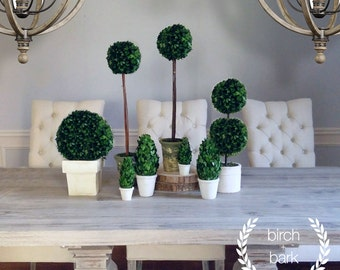 """Preserved Boxwood - Boxwood - 2 3/4""""Round x 7 1/2""""H Preserved Boxwood Cone Shaped Topiary in Clay Pot"""