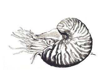 Nautilus Ink Painting 11x14 Fine Art Giclee Print