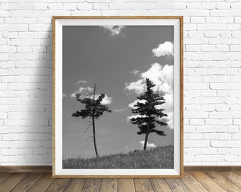 """nature photography, large art, printable art, instant download printable art, black and white, modern, contemporary - """"High Country Pines"""""""