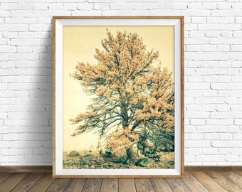"photography, tree, instant download art, printable art, photography, instant download, farmhouse chic, nature, woodland, art -""Past Lives"""
