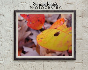 Nature Photography - Fall leaves - Photography Print - 5x7 - 8x10 - 11x14