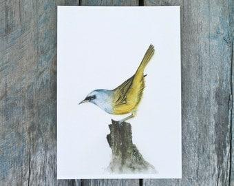 Watercolor bird print, yellow bird wall art, archival giclee print, realistic bird illustration, forest bird decor, bird collection, 5x7