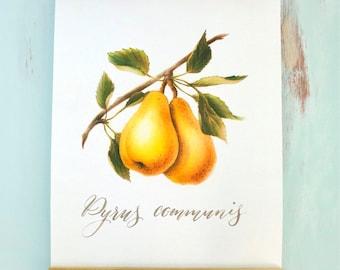 Wall Hanging, Wall Art, Art Print, Home Decor, Bosc Pear, Botanical Illustration, Autumn, Fall, Seasonal, Wood Trimmed