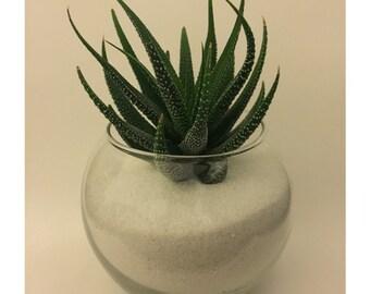 Succulent planter / Sand terrarium