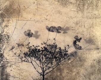 Flowers for Goethe, botanical art, garden art, flower print, mixed media, venetian plaster, italian fresco,wall decor, limited edition,