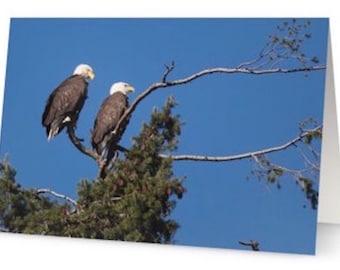 Quality Gloss Eagle Photo Cards