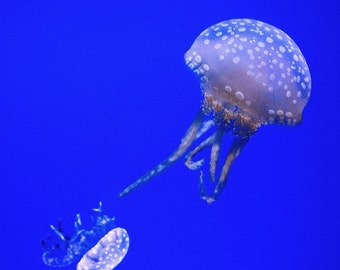 Jellyfish Photograph Wall-Art