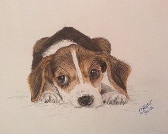 Custom Portrait, pet portraits